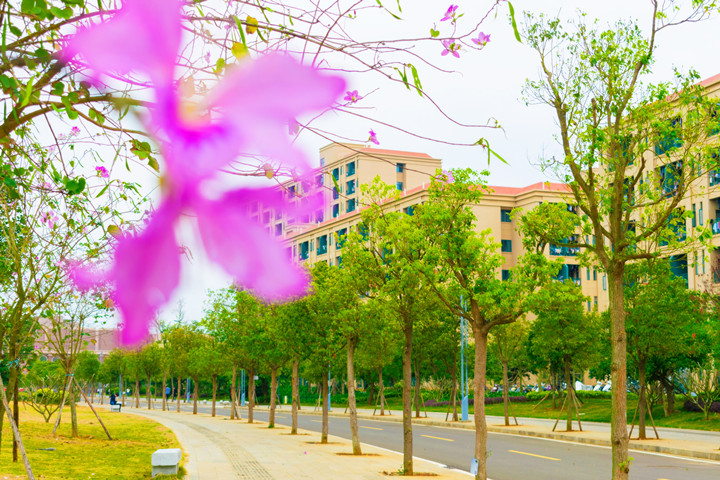 广东海洋大学寸金学院校园风光6