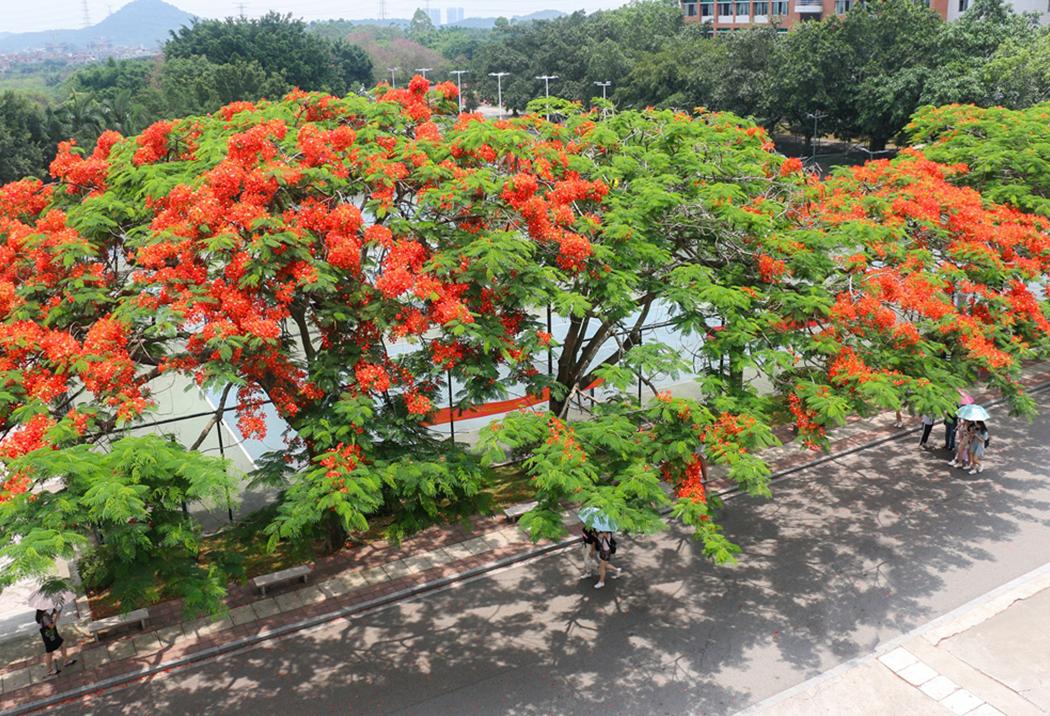 广州商学院校园风光4