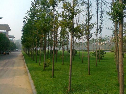 郑州工程技术学院校园风光1
