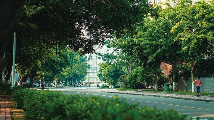 广东石油化工学院(与广东轻工职业技术学院联合办学)校道1