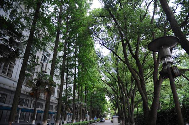 上海科学技术职业学院校园风光5