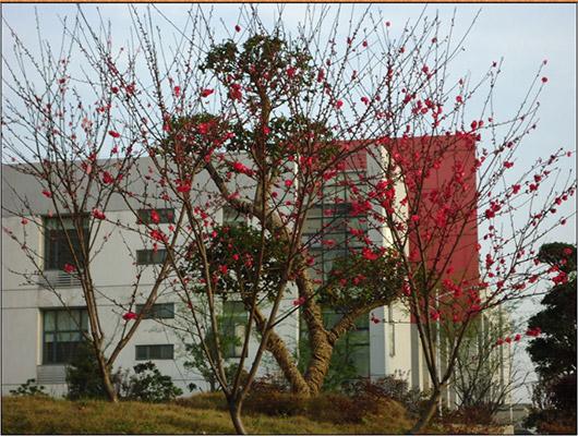 武汉软件工程职业学院校园风光1